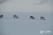 0311_SvalbardNatur_017.jpg