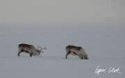 0311_SvalbardNatur_019.jpg